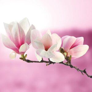 Servetele roz orhidee 22900